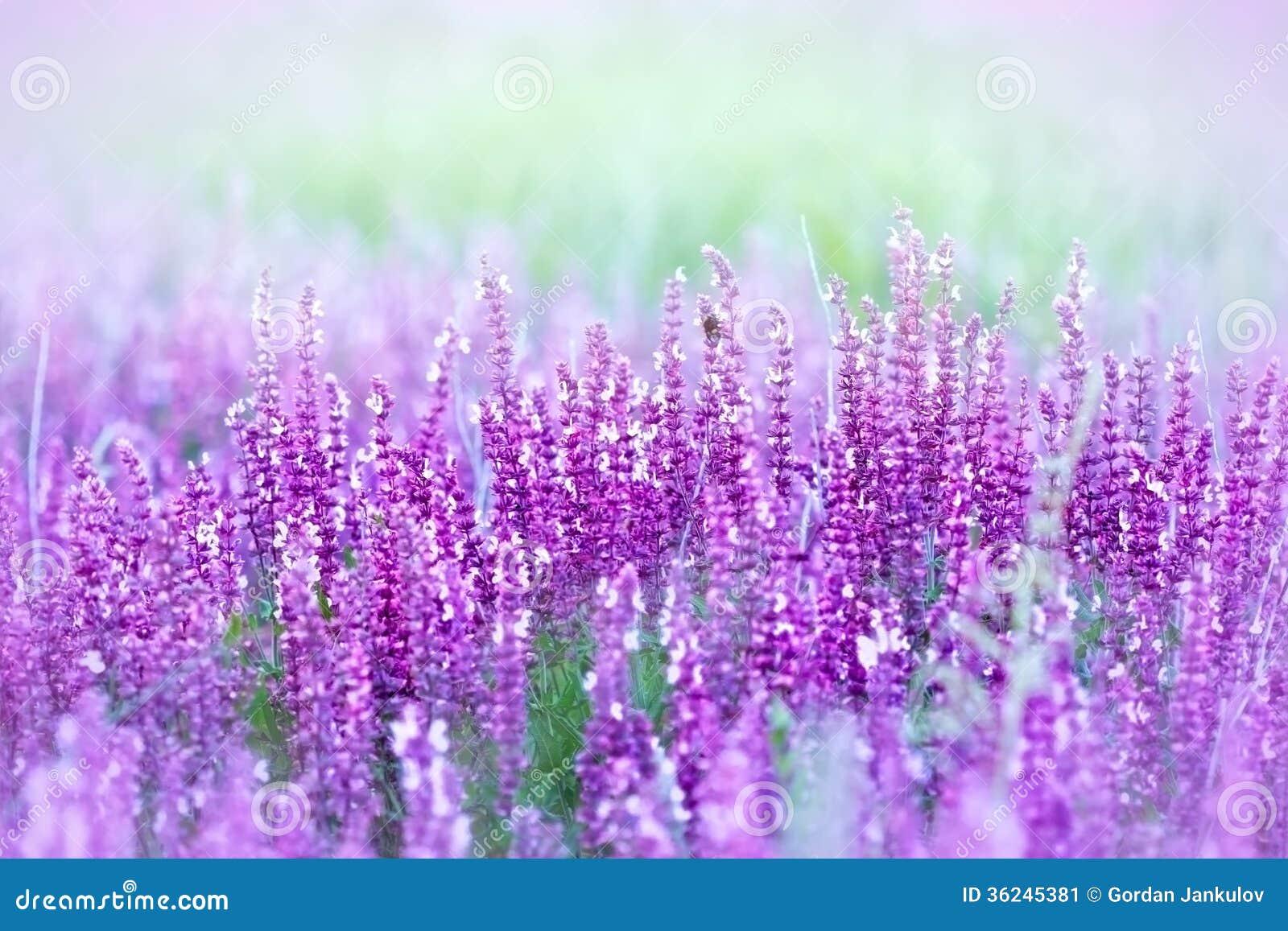 Wild meadow flowers - purple flowers.