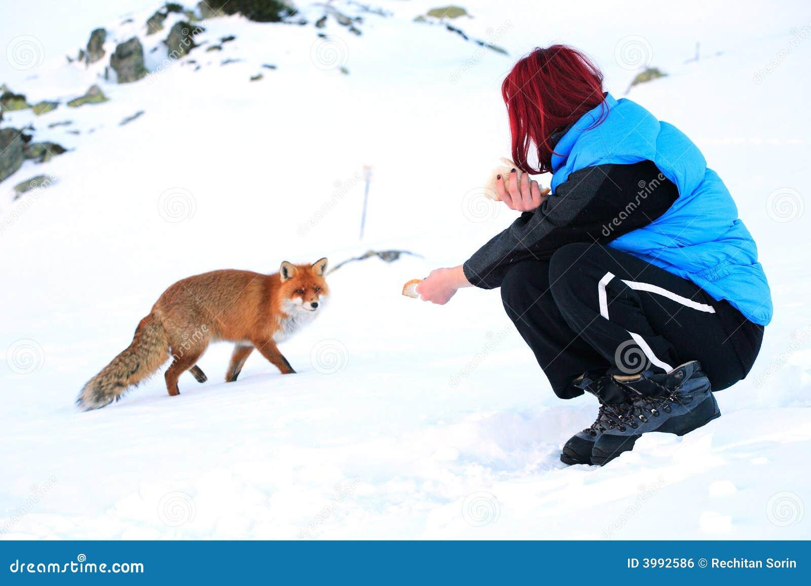 Wild räv