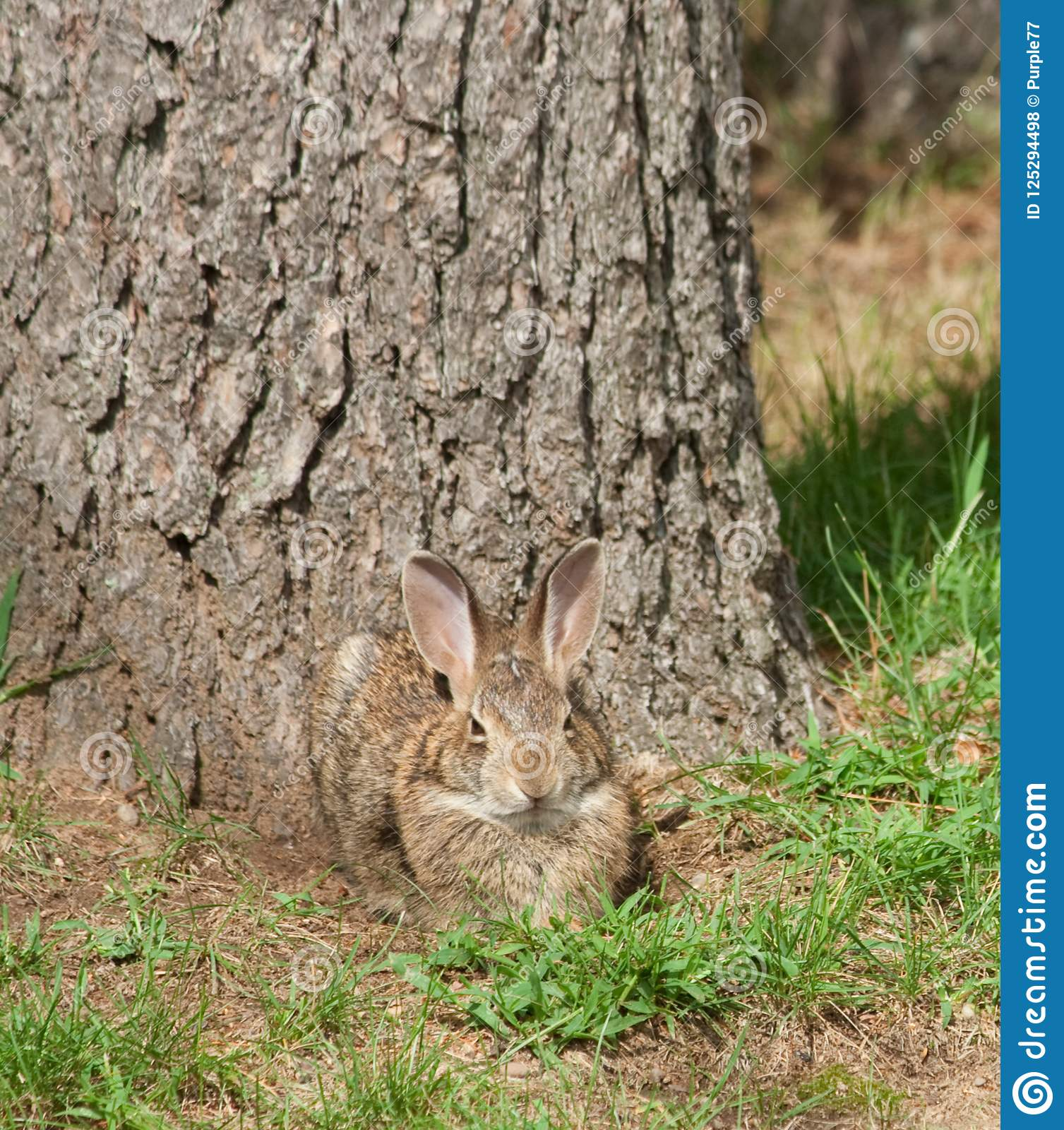 Wild Rabbit with a Grin