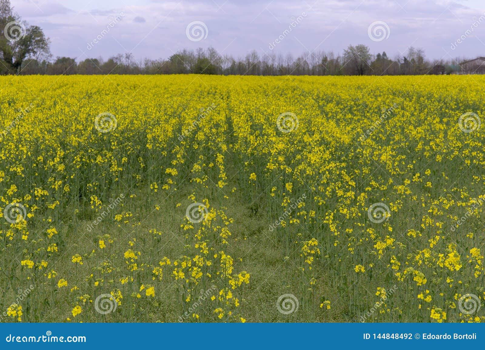 Wild rape in the fields