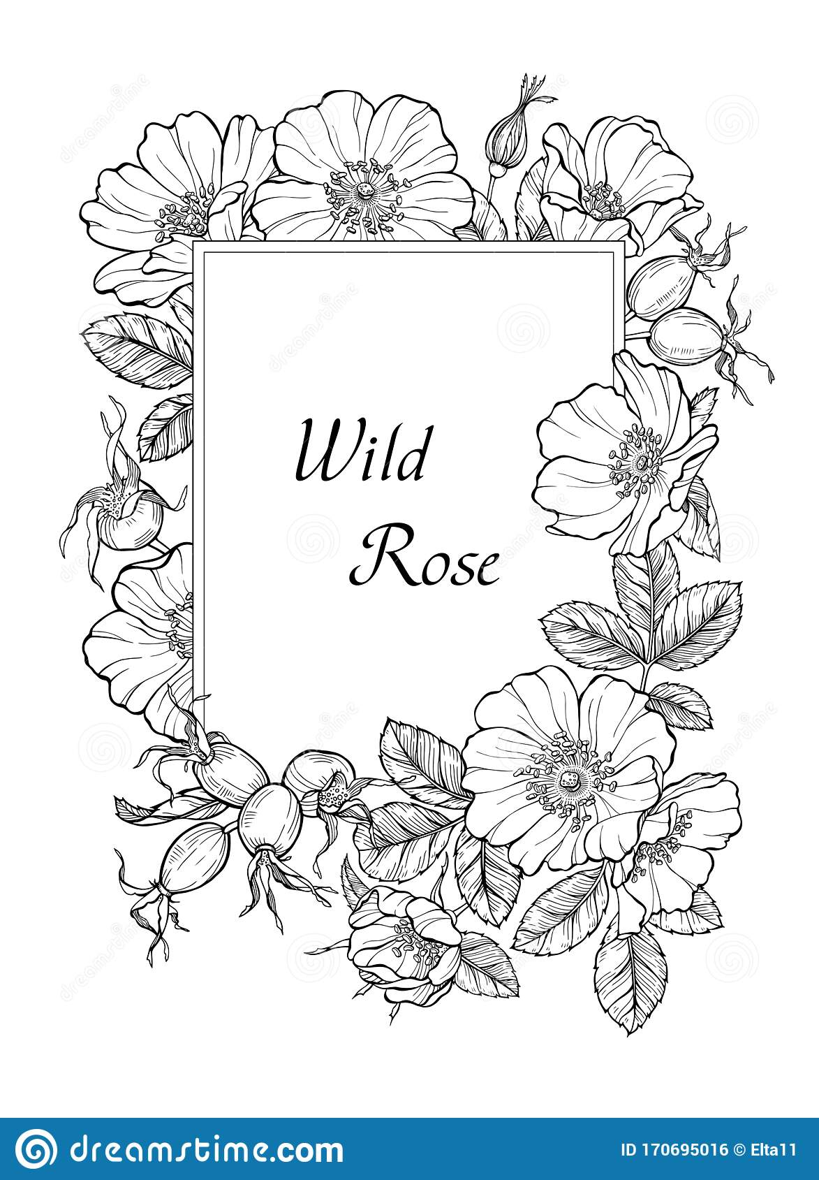 Wild Rose Flowers And Berries Card Template Line Art Drawing Floral Rectangular Border Frame Vector Illustration Stock Vector Illustration Of Decorative Briar 170695016