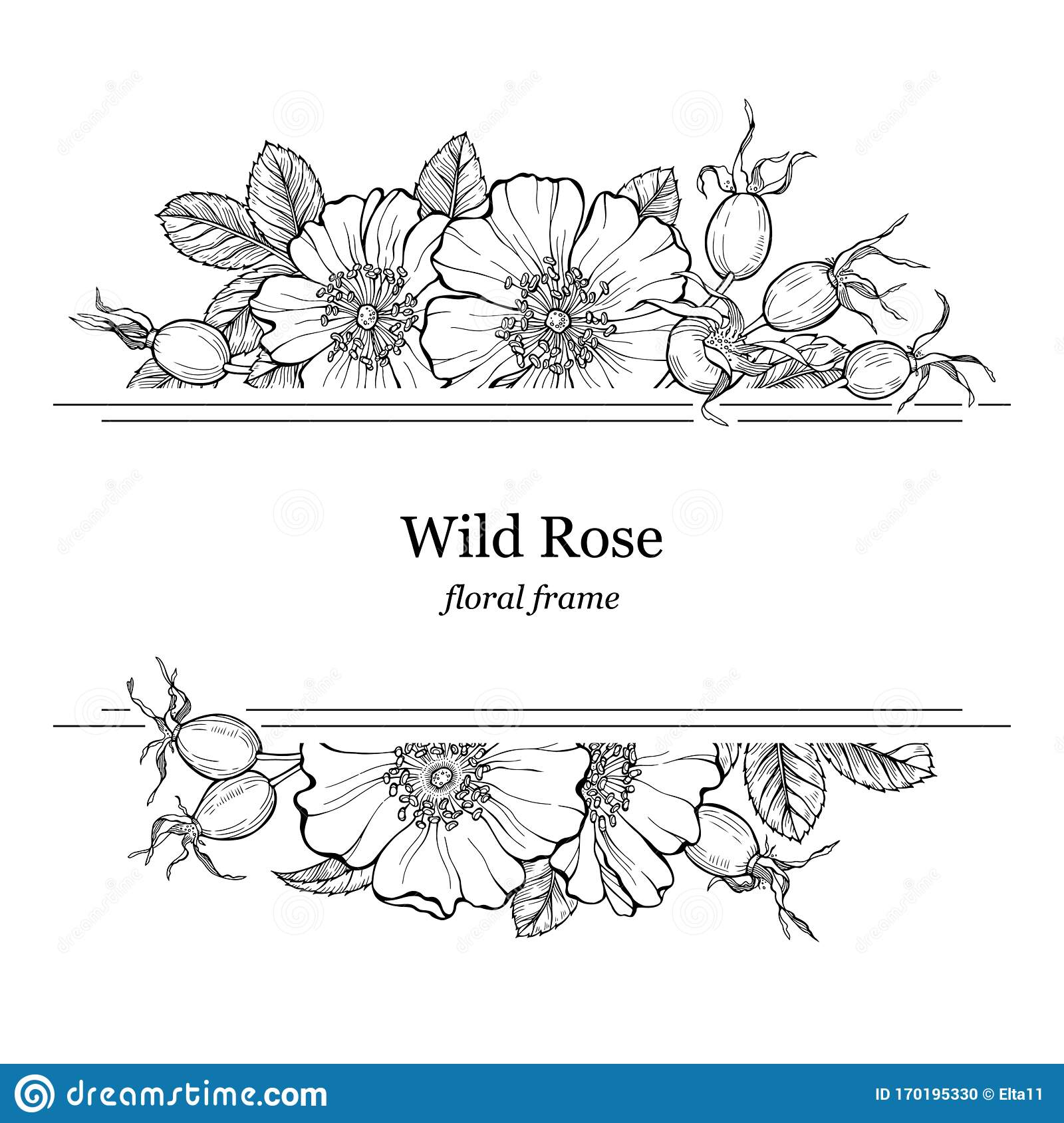 Wild Rose Flowers And Berries Frame Line Art Drawing Floral Border Template With Dog Rose Boquets Vector Illustration Stock Vector Illustration Of Berry Herbal 170195330