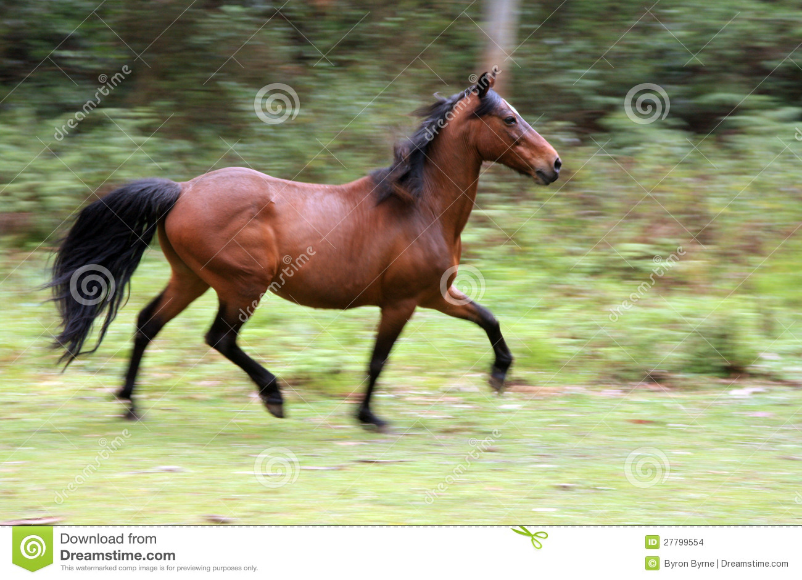 Wild Horse Running Fast Wild Running Horse Sto...