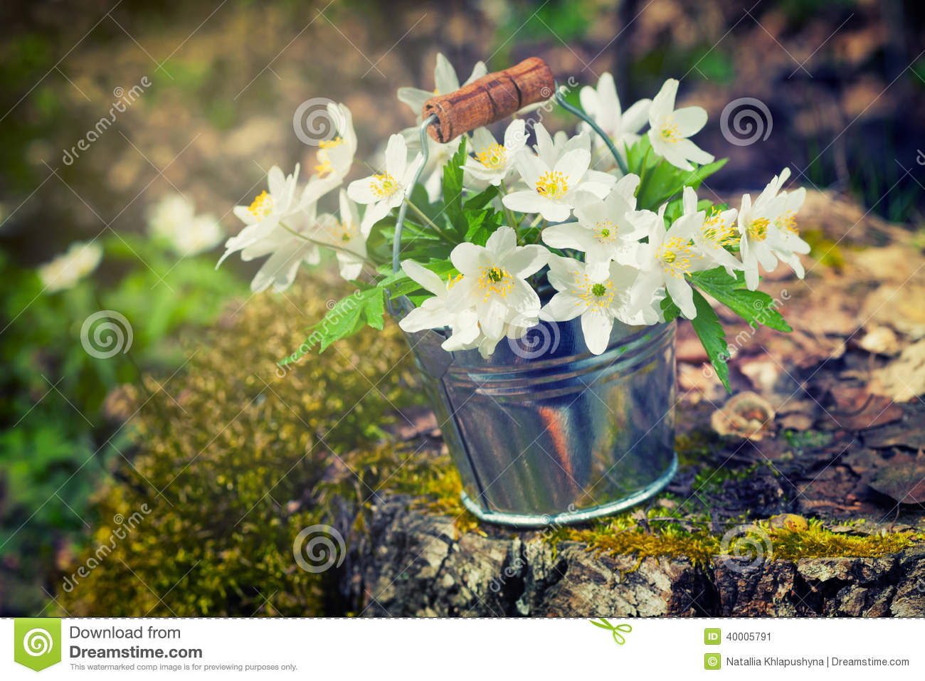 Wild Spring Flowers Anemone In Bucket In Forest Stock Image Image