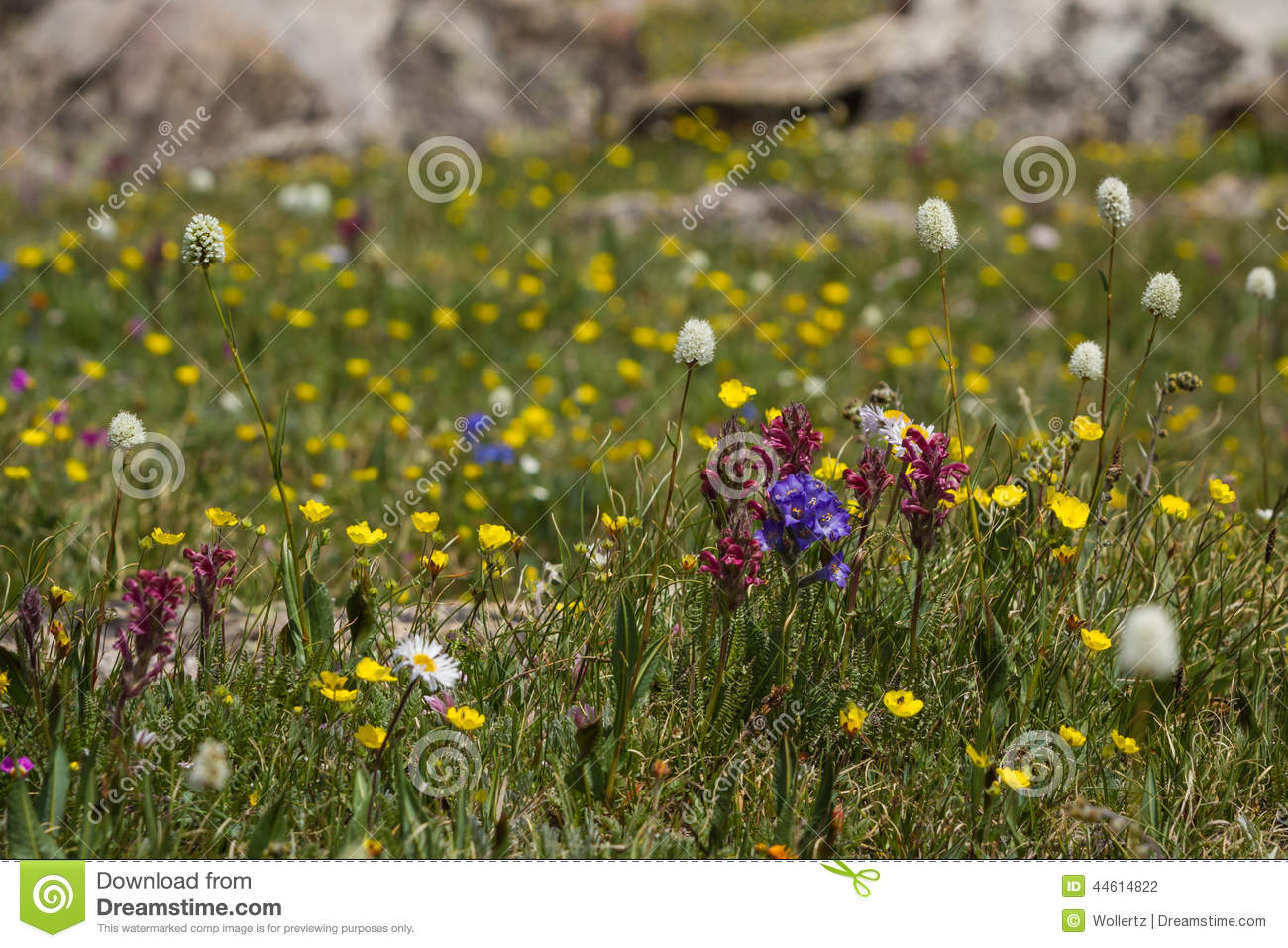 Wild Spring Flowers Stock Photo Image Of Landscaping 44614822