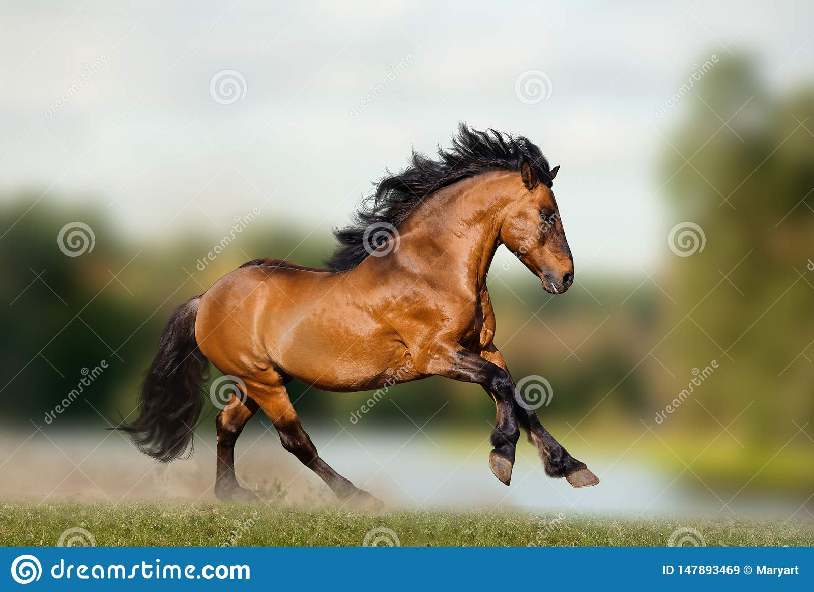 124 373 Stallion Photos Free Royalty Free Stock Photos From Dreamstime