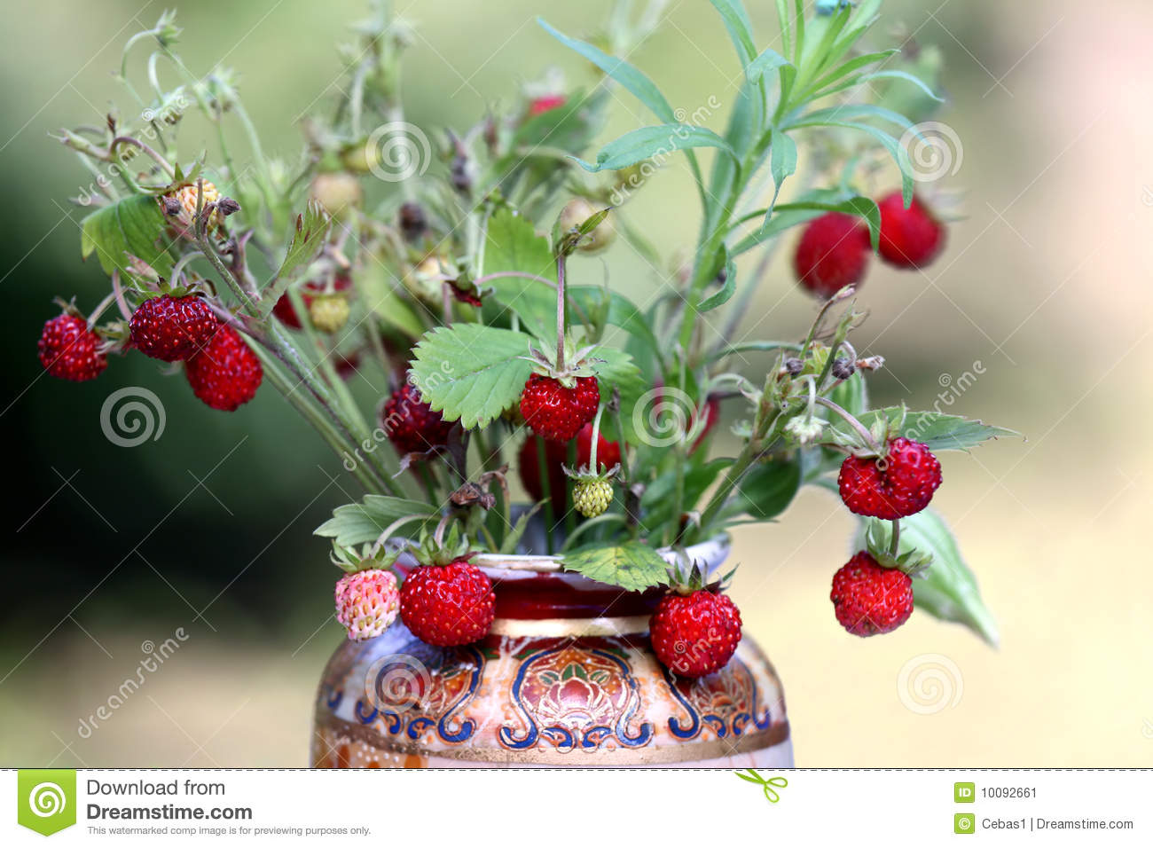 Wild Strawberry Bouquet Stock Image Image Of Berry Bunch 10092661