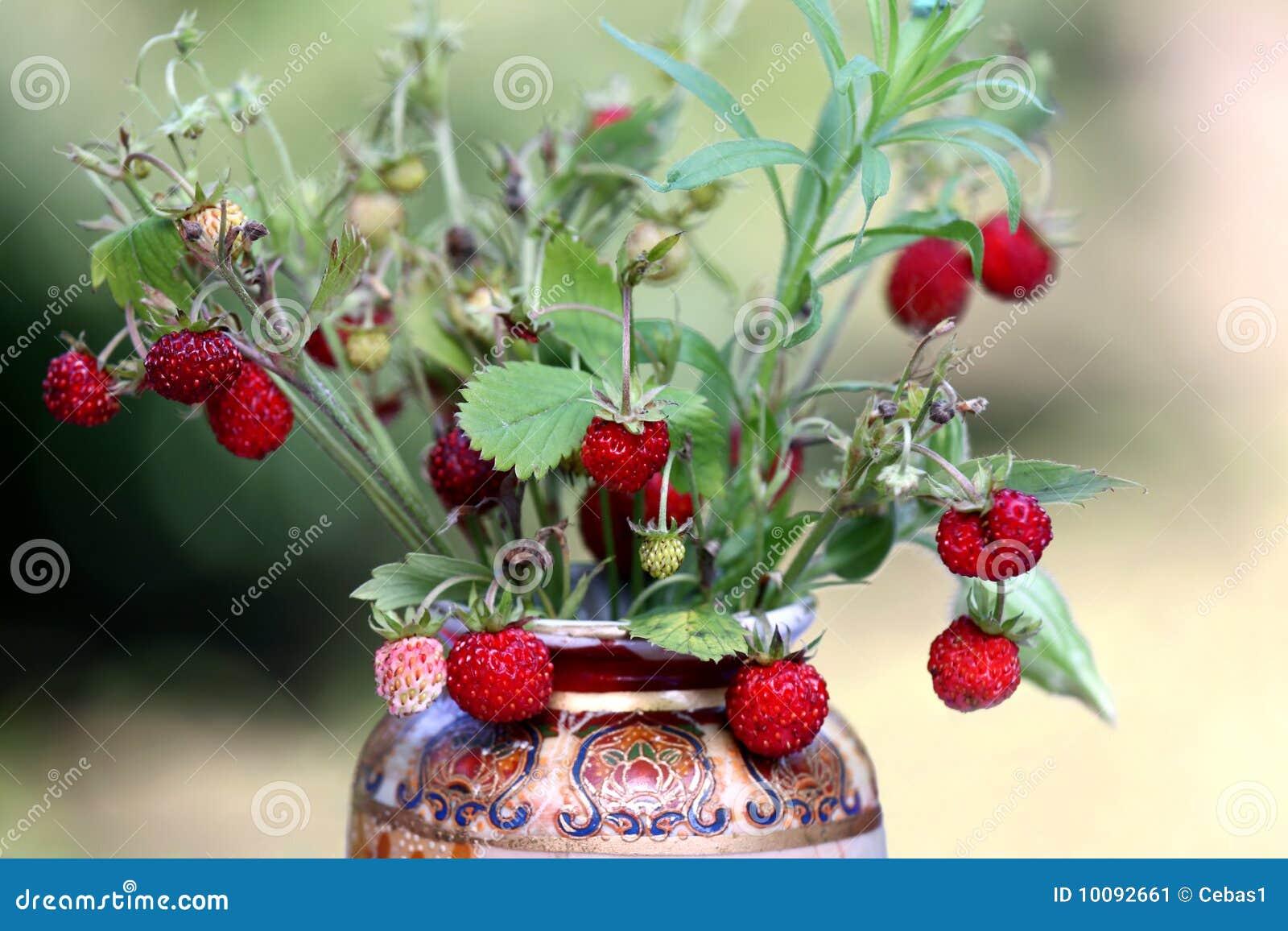 Wild Strawberry Bouquet Stock Image Image 10092661