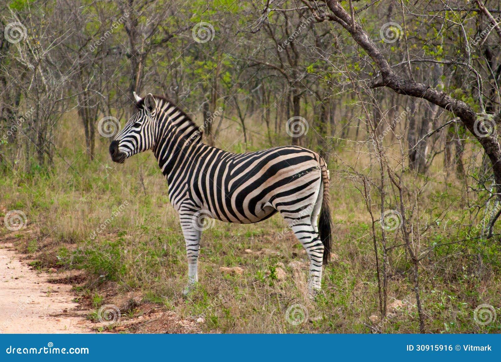 Parques Naturales de Sudáfrica