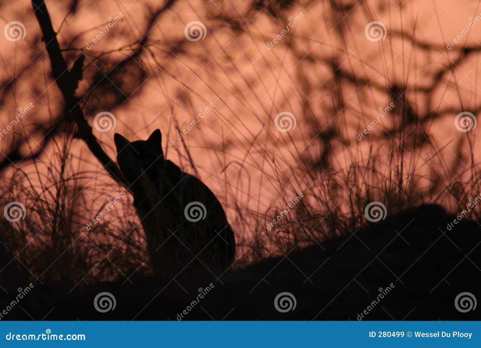 Wild svart katt