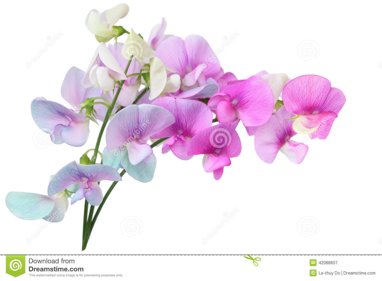 Wild Sweet Pea Flowers... Yellow Hibiscus Clip Art