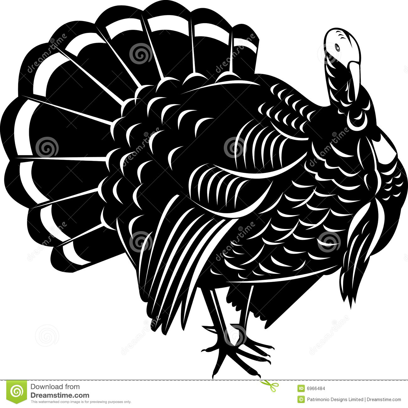 Vector art of a Wild turkey isolated on white.