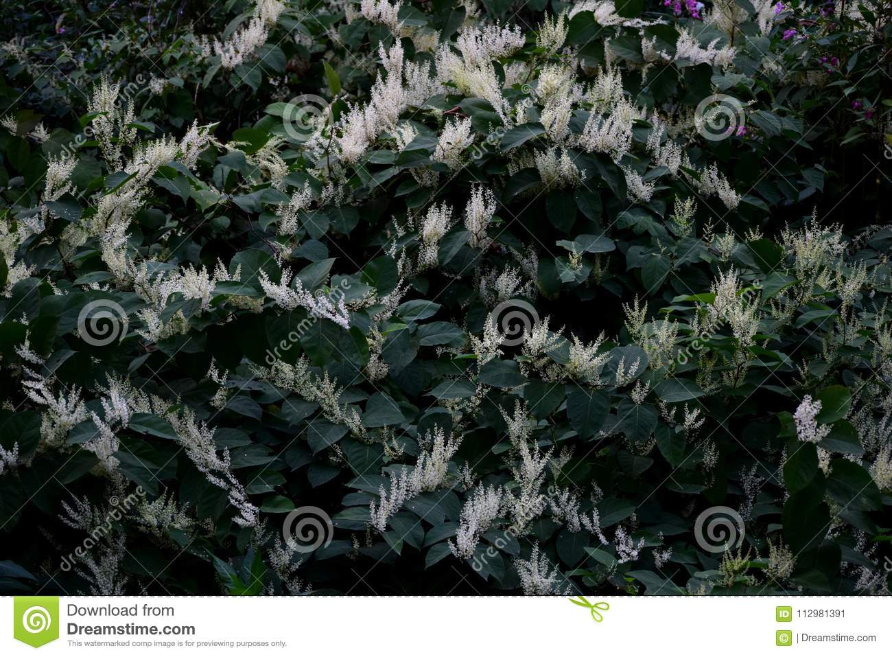 Wild vegetation with white flowers