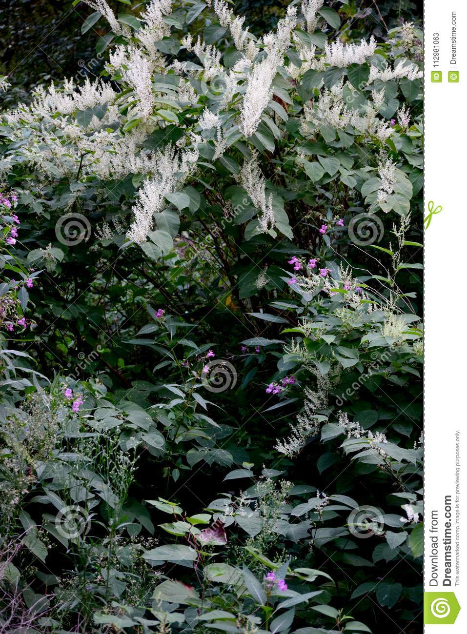 Wild vegetation with white and pink flowers