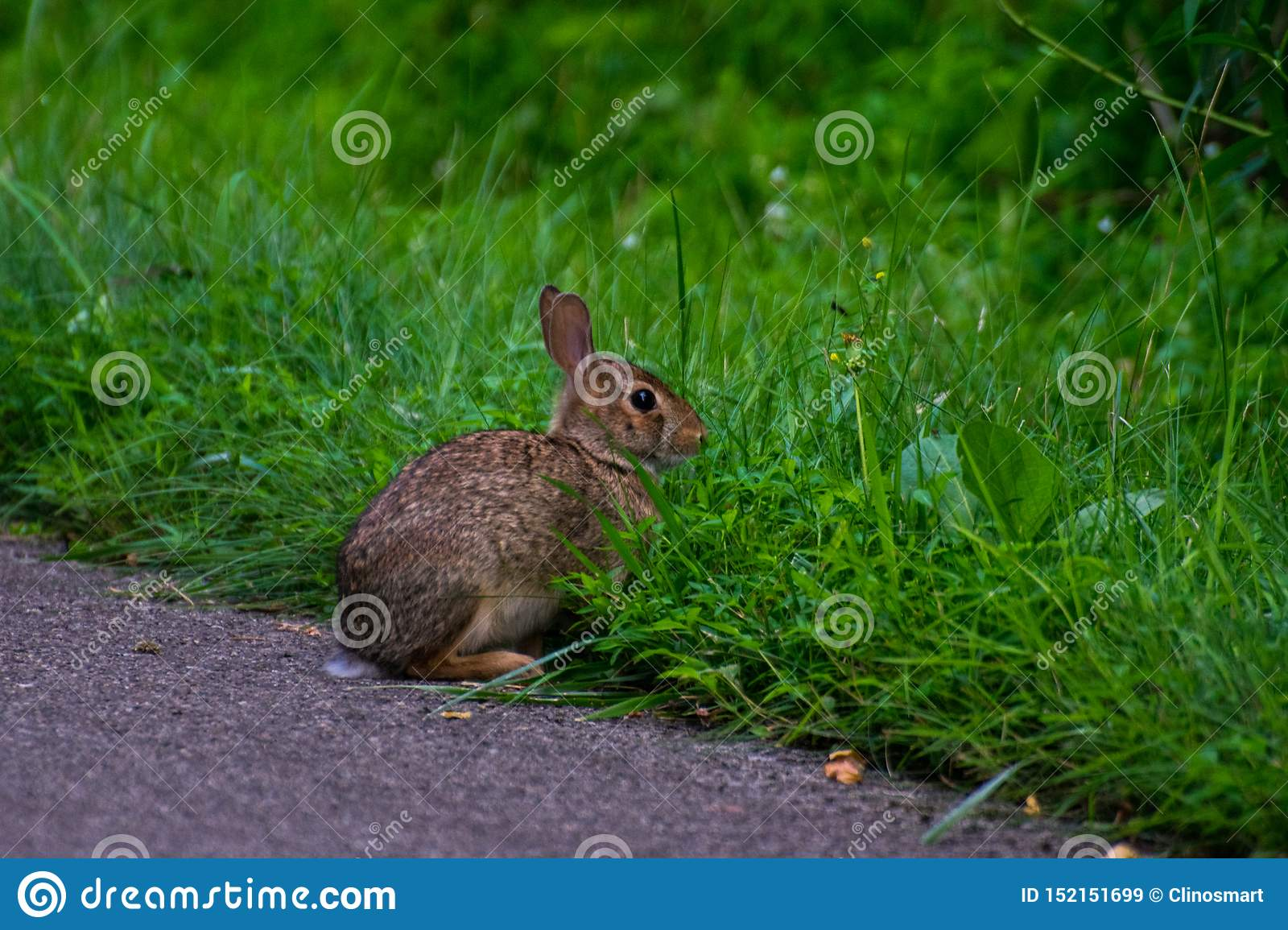 A wild and very cute rabbit