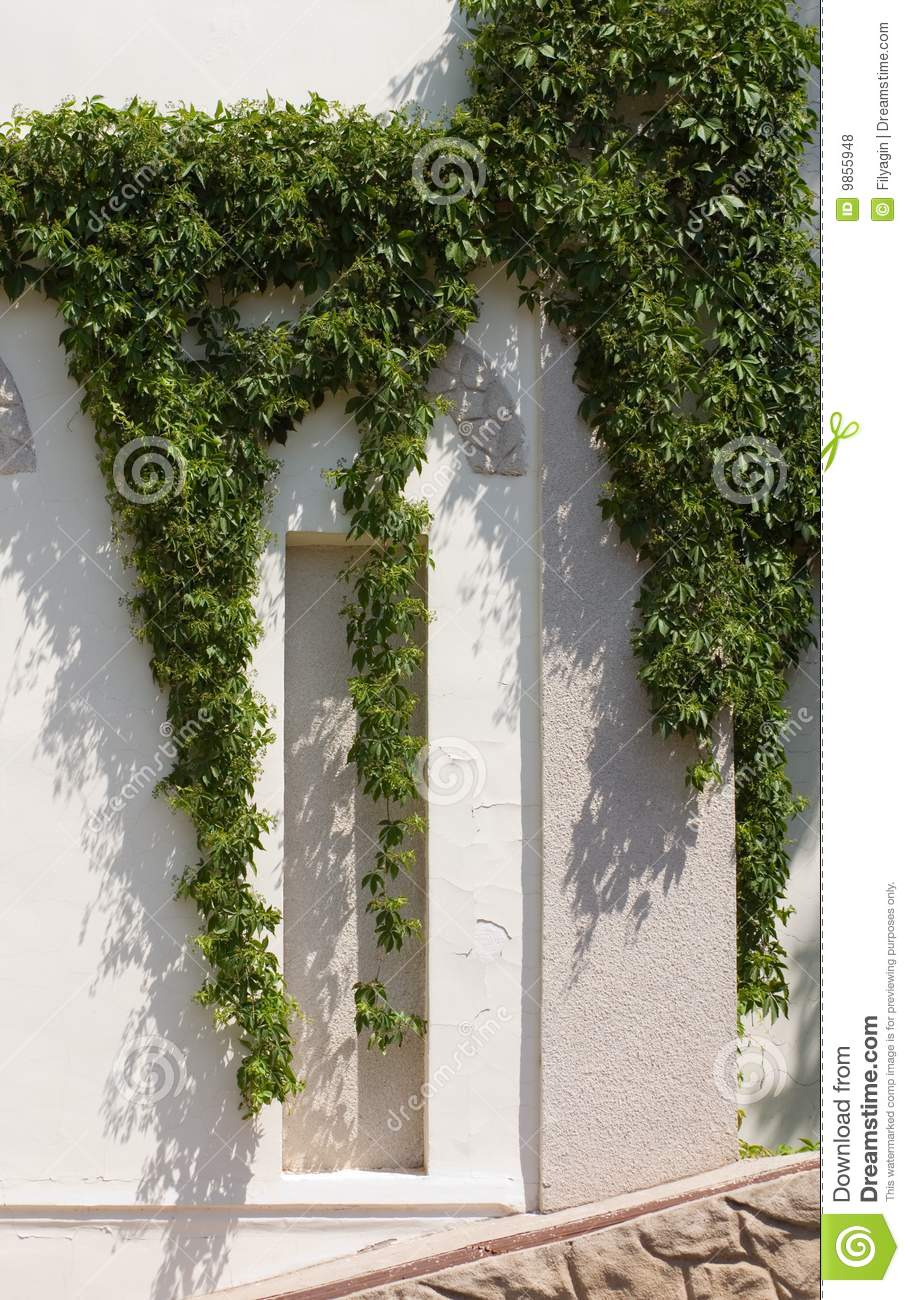 Wild Vine Climbing The Wall Of A House Stock Photo Image