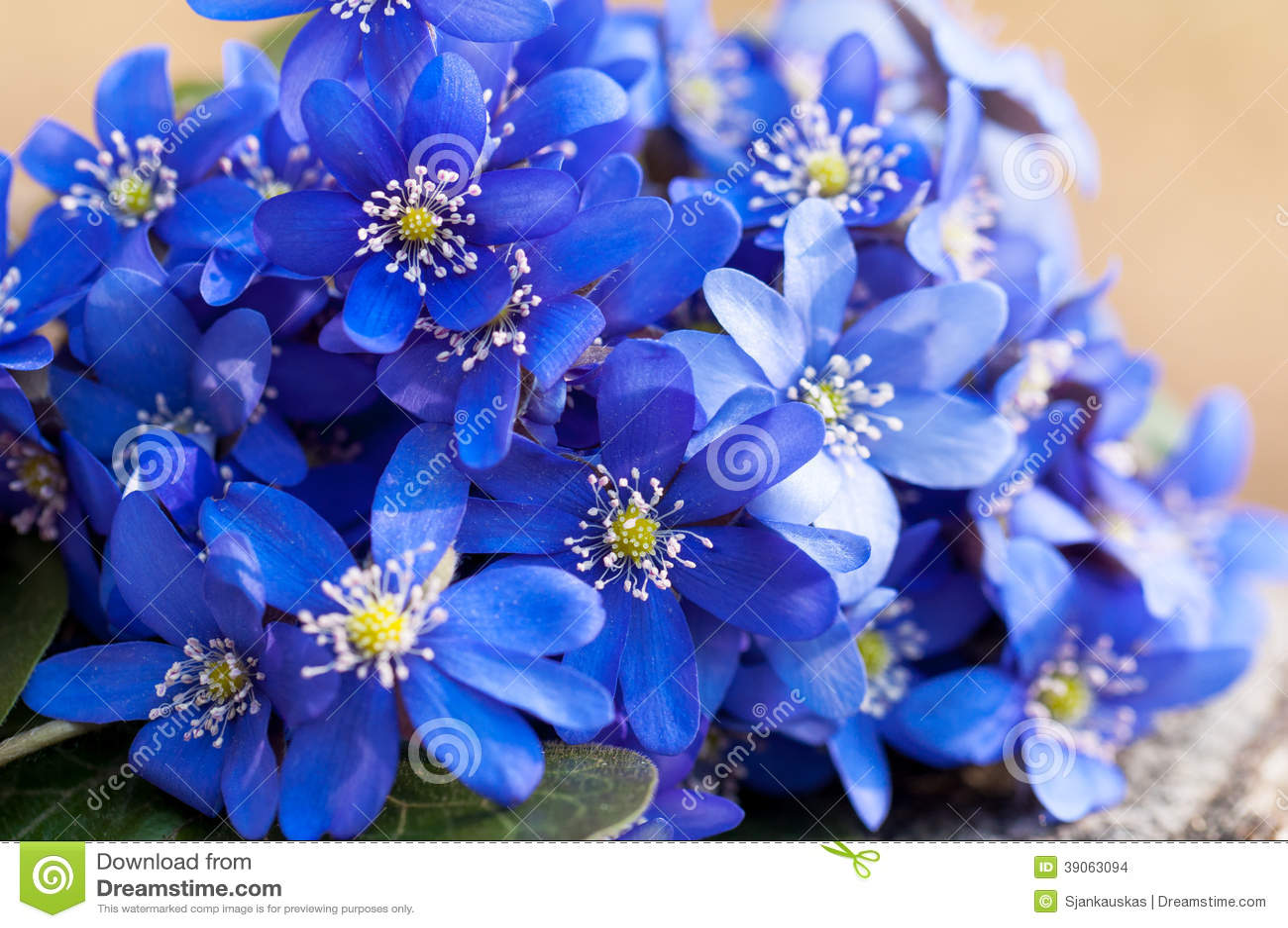 Wild Violets Bouquet Stock Photo - Image: 39063094