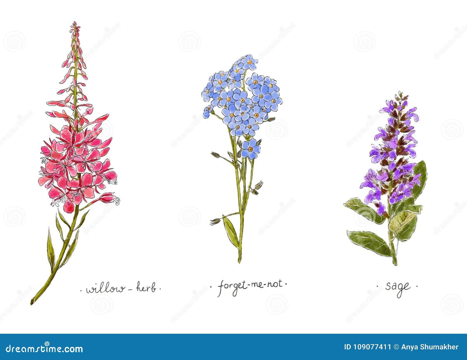 Wild Wachsende Pflanzen Und Blumenhand Gezeichnet In Farbe Weide