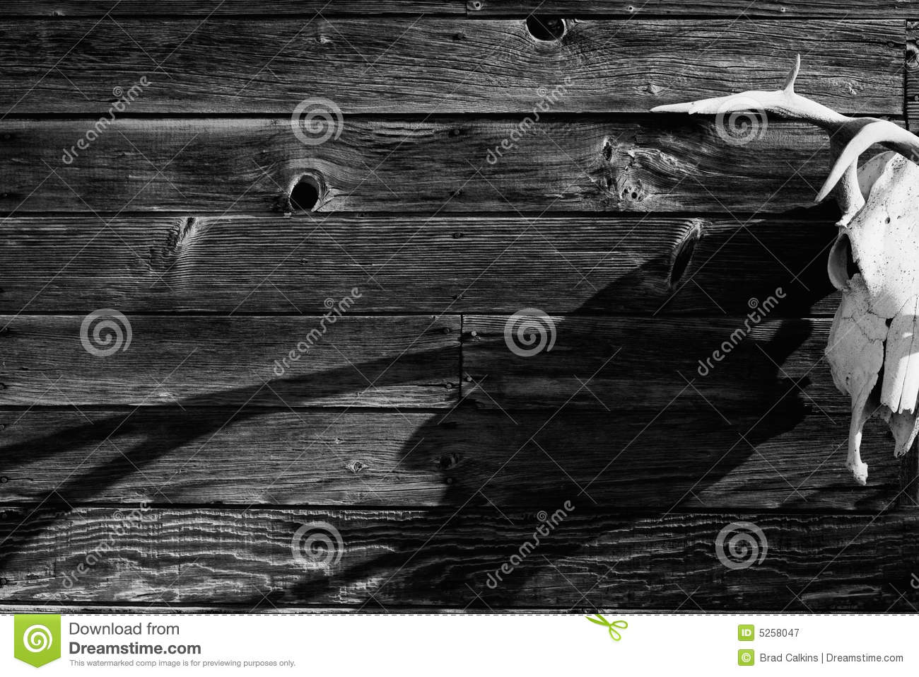 wild west stock image image of grain skull background 5258047