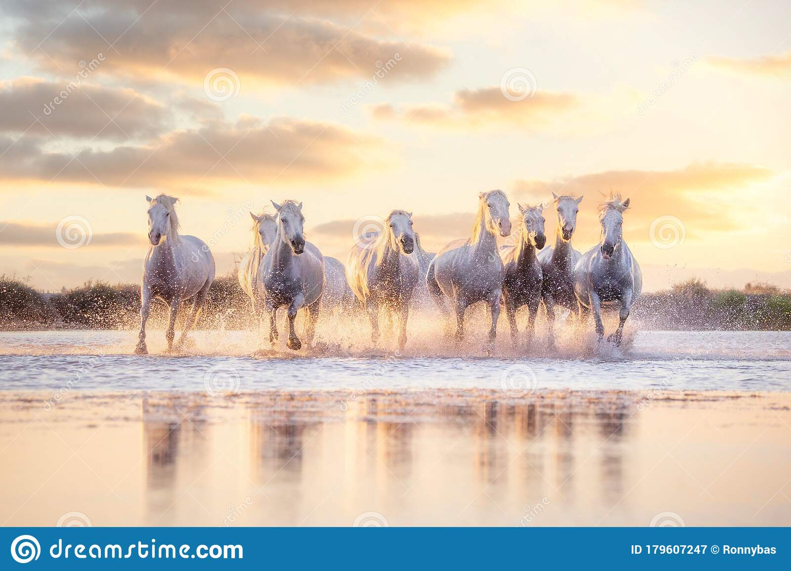 1 752 Wild Horses Running Sunset Photos Free Royalty Free Stock Photos From Dreamstime