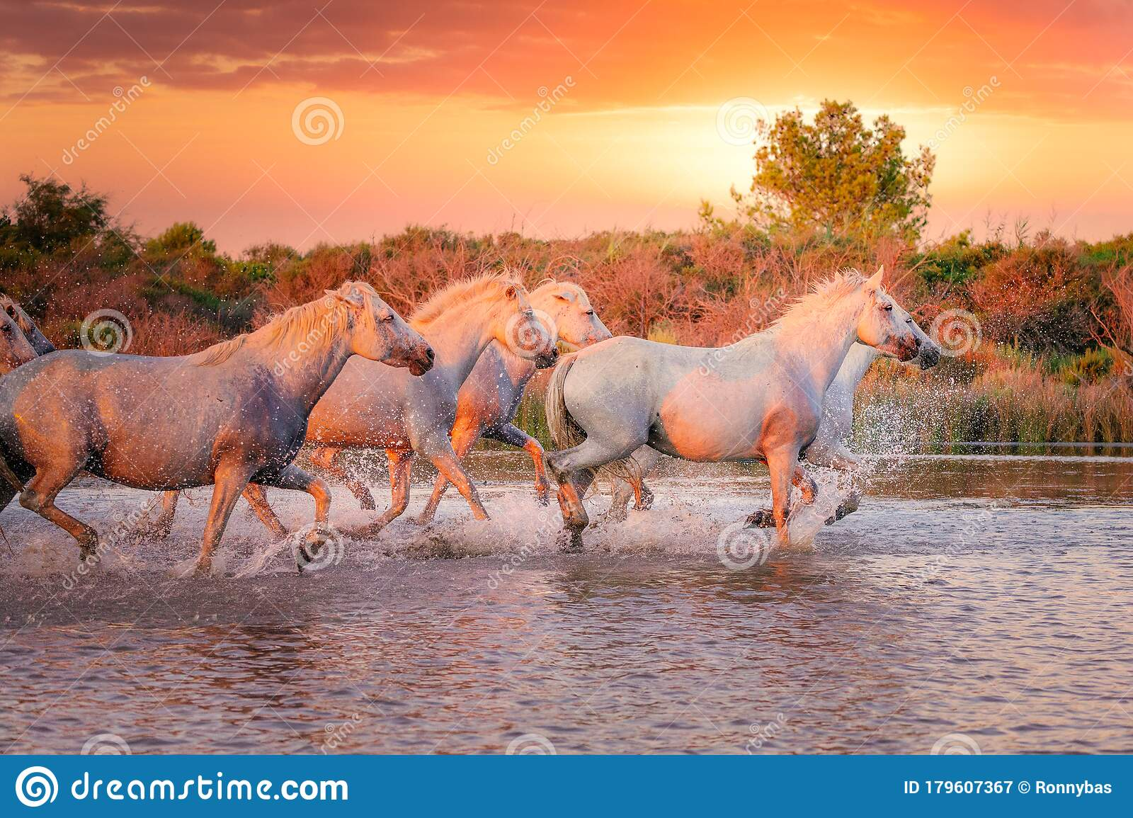 6 798 Horses Running Wild Photos Free Royalty Free Stock Photos From Dreamstime