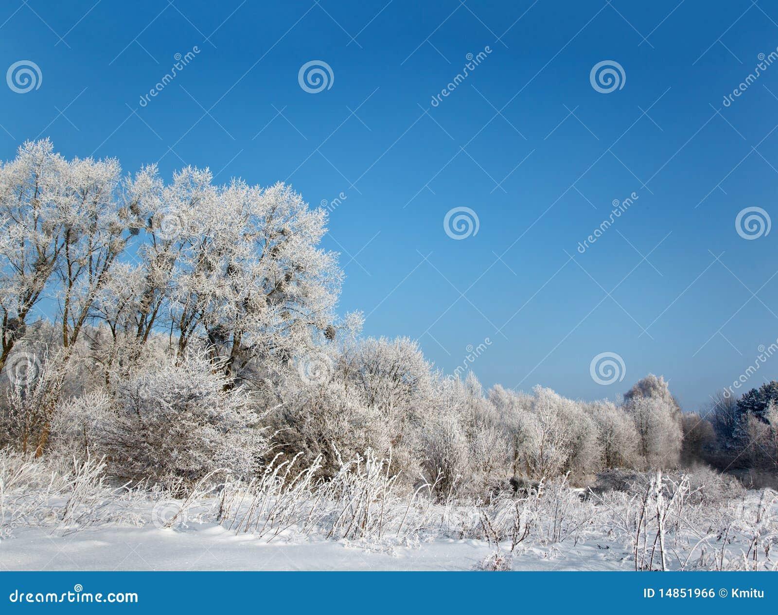 Wild winter scenery