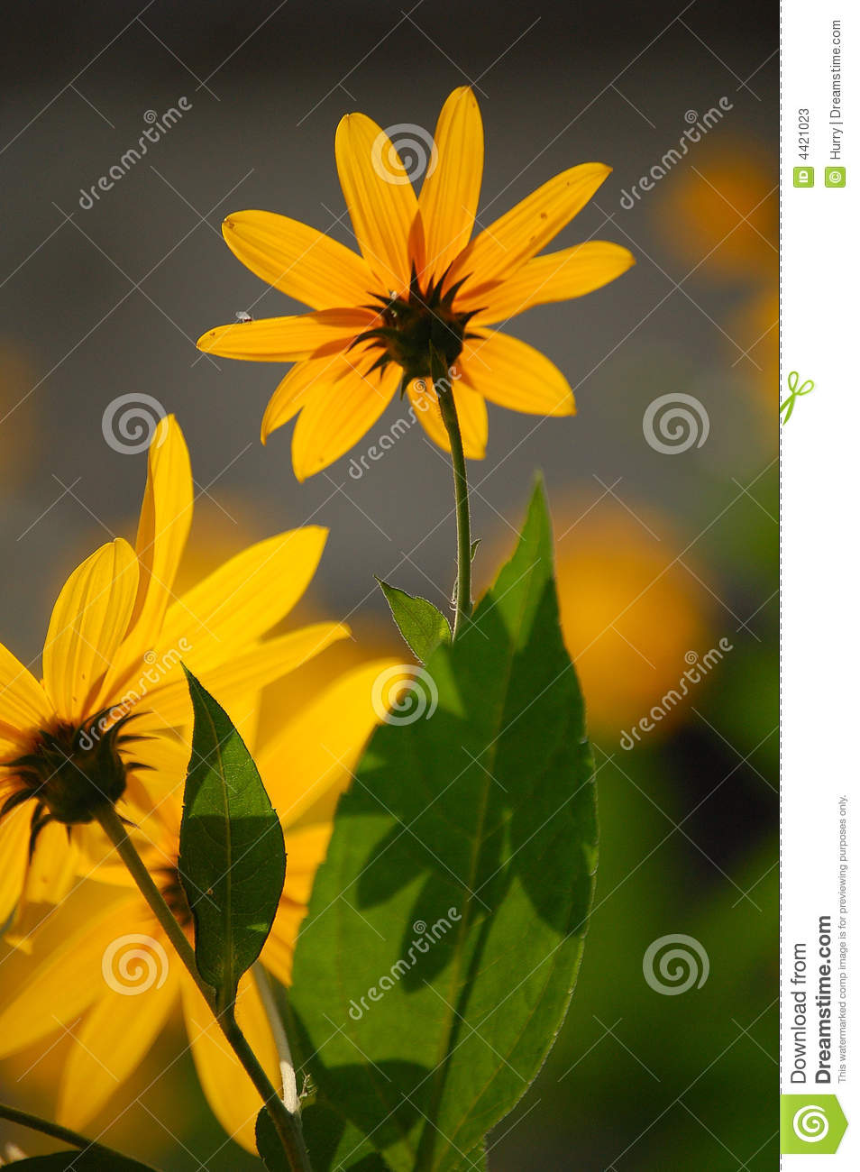 Wild yellow flowers stock image image of green flower 4421023 download wild yellow flowers stock image image of green flower 4421023 mightylinksfo