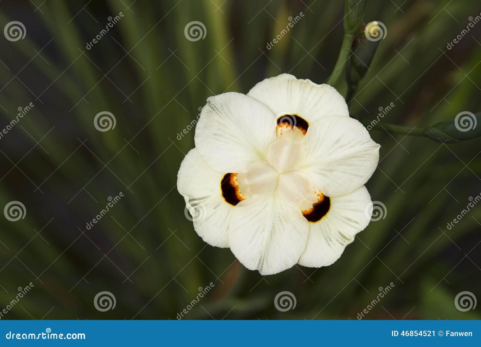 Wild Yellow Iris Stock Image Image Of Flower Nature 46854521