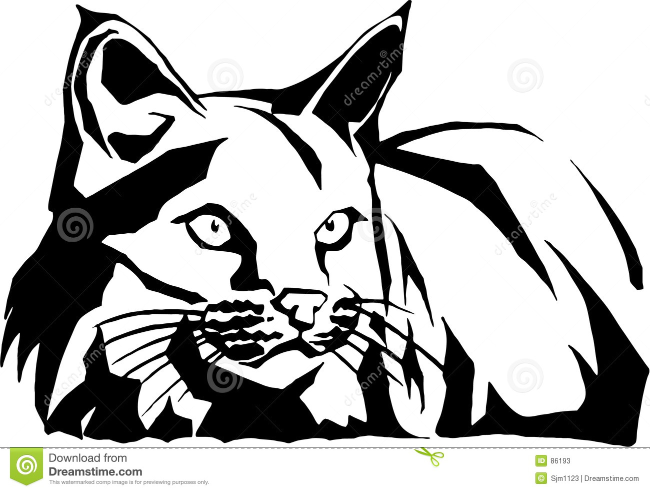 Wildcat Illustration