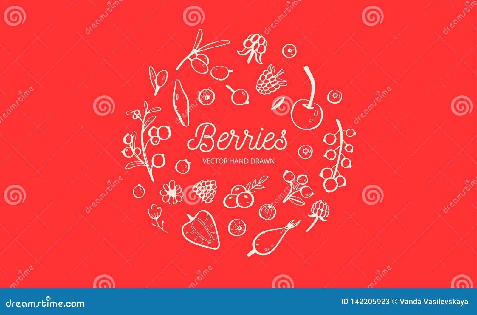 Wilde Bessen en vruchten vectorreeks De framboos, de Kers, de aardbei, de braambes en andere zomer oogsten getrokken Hand