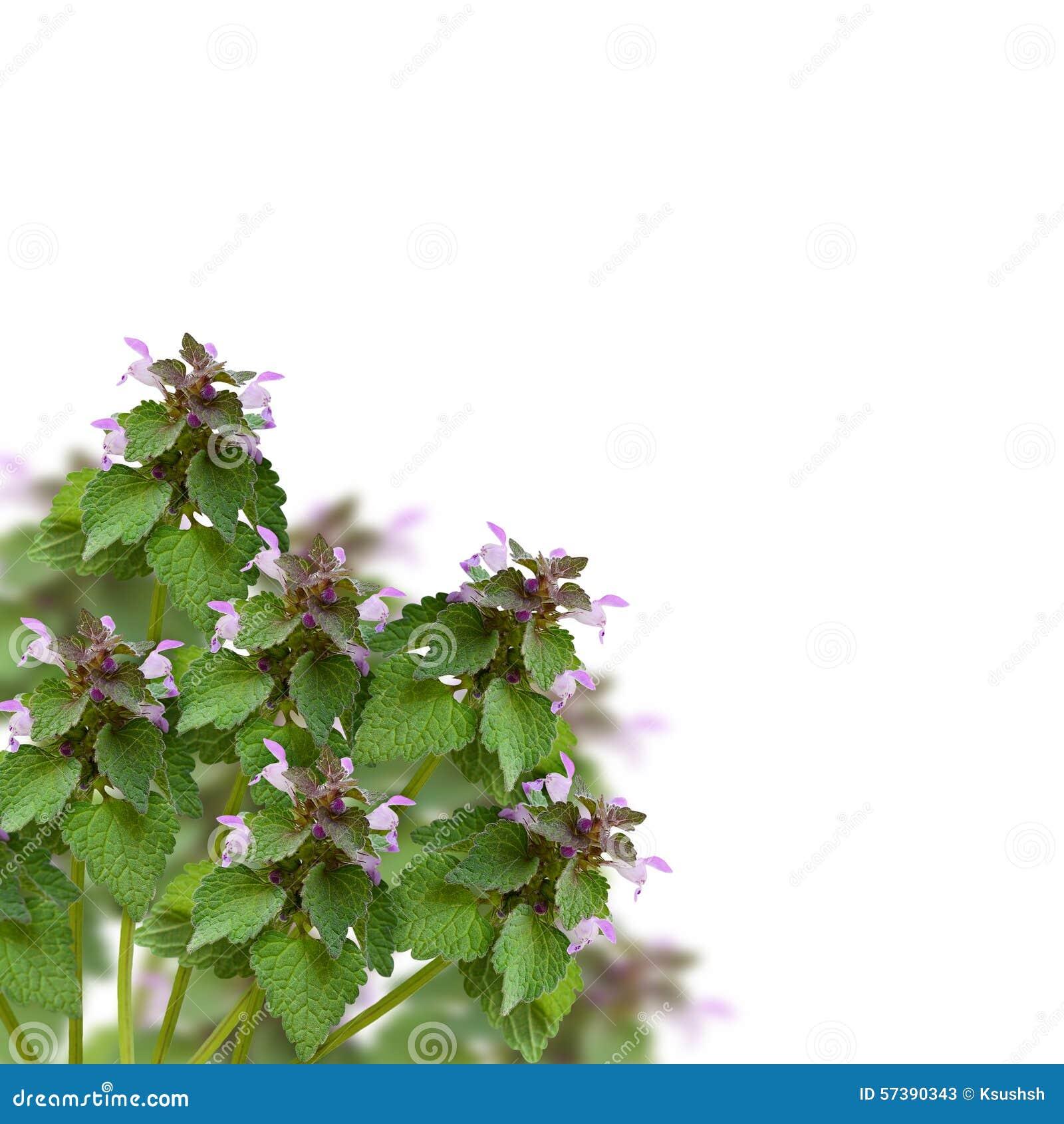 Wilde bloemen in een hoek
