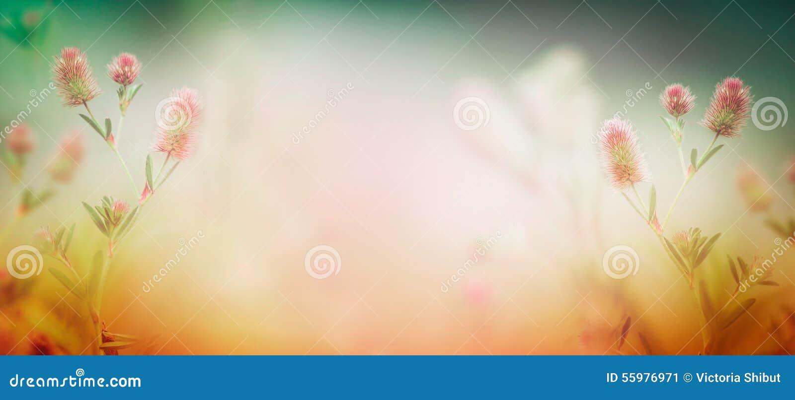 Wilde bloemeninstallatie op de zomer of de herfstaardachtergrond, banner