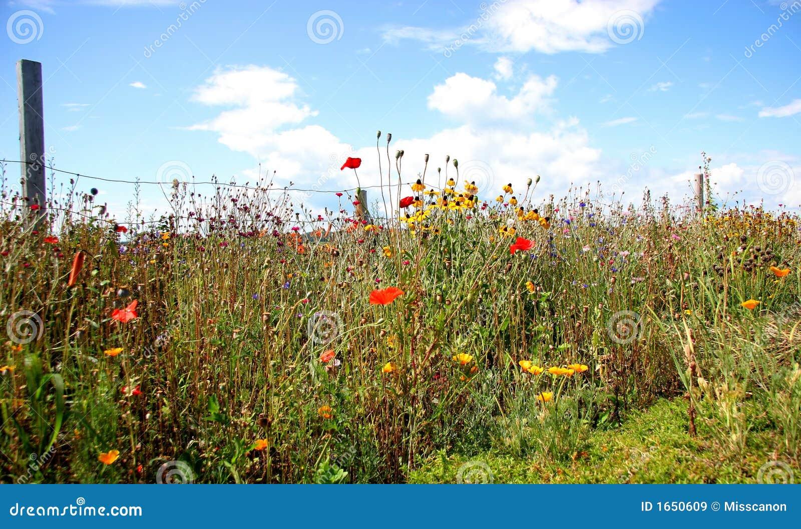 Wilde bloementuin stock afbeelding afbeelding bestaande for Www bloem en tuin nl