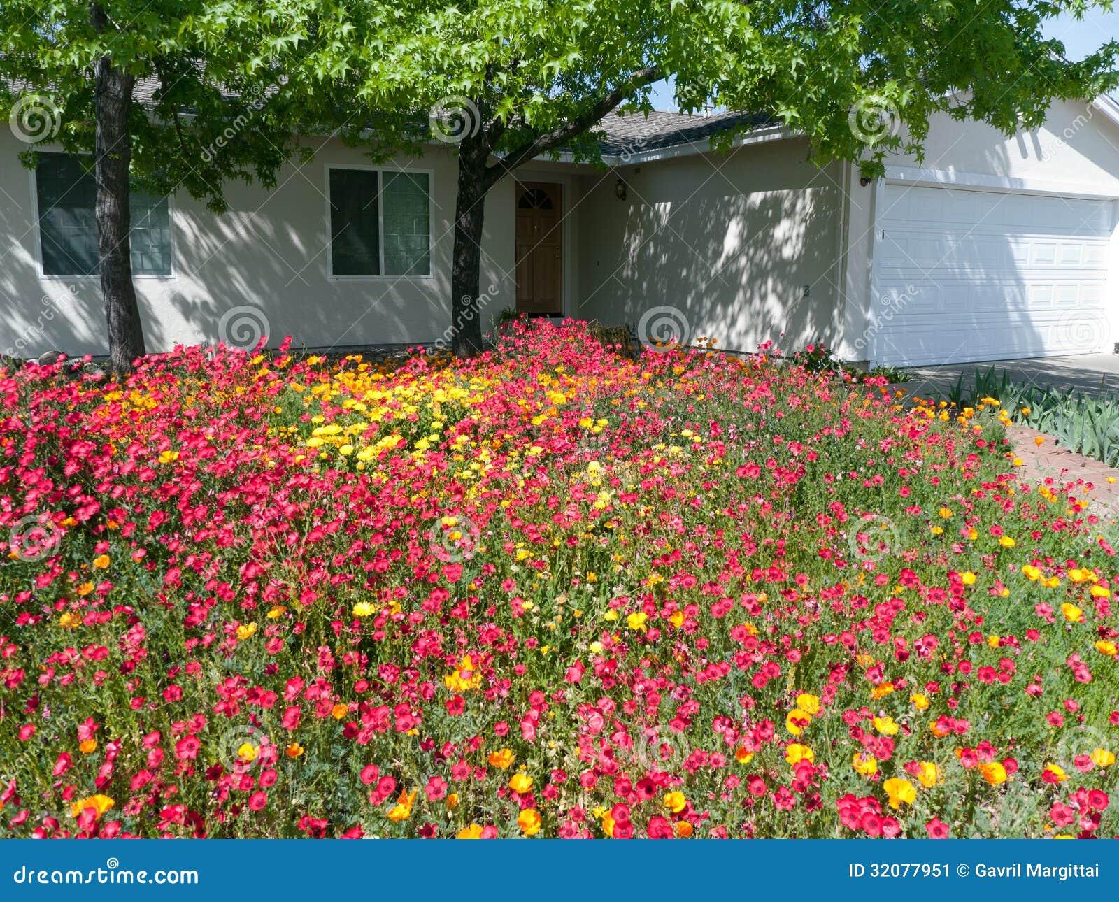 Wilde Blumen Im Vorgarten Stockbild Bild Von Bluhen 32077951