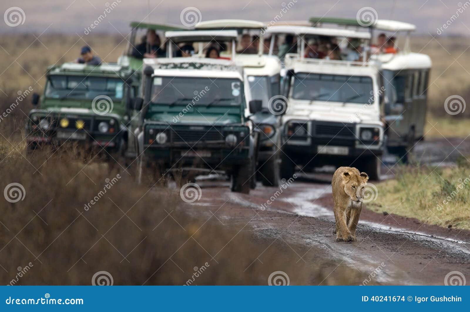 Wilde dier en mensen