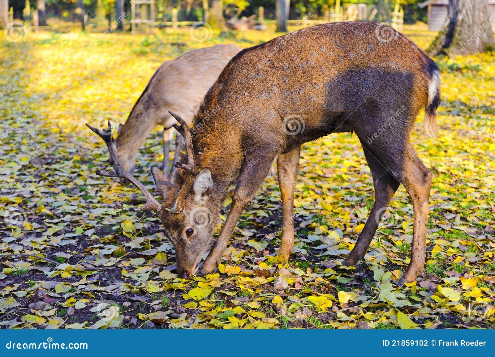 Populair Wilde dieren in de herfst stock foto. Afbeelding bestaande uit @WK33
