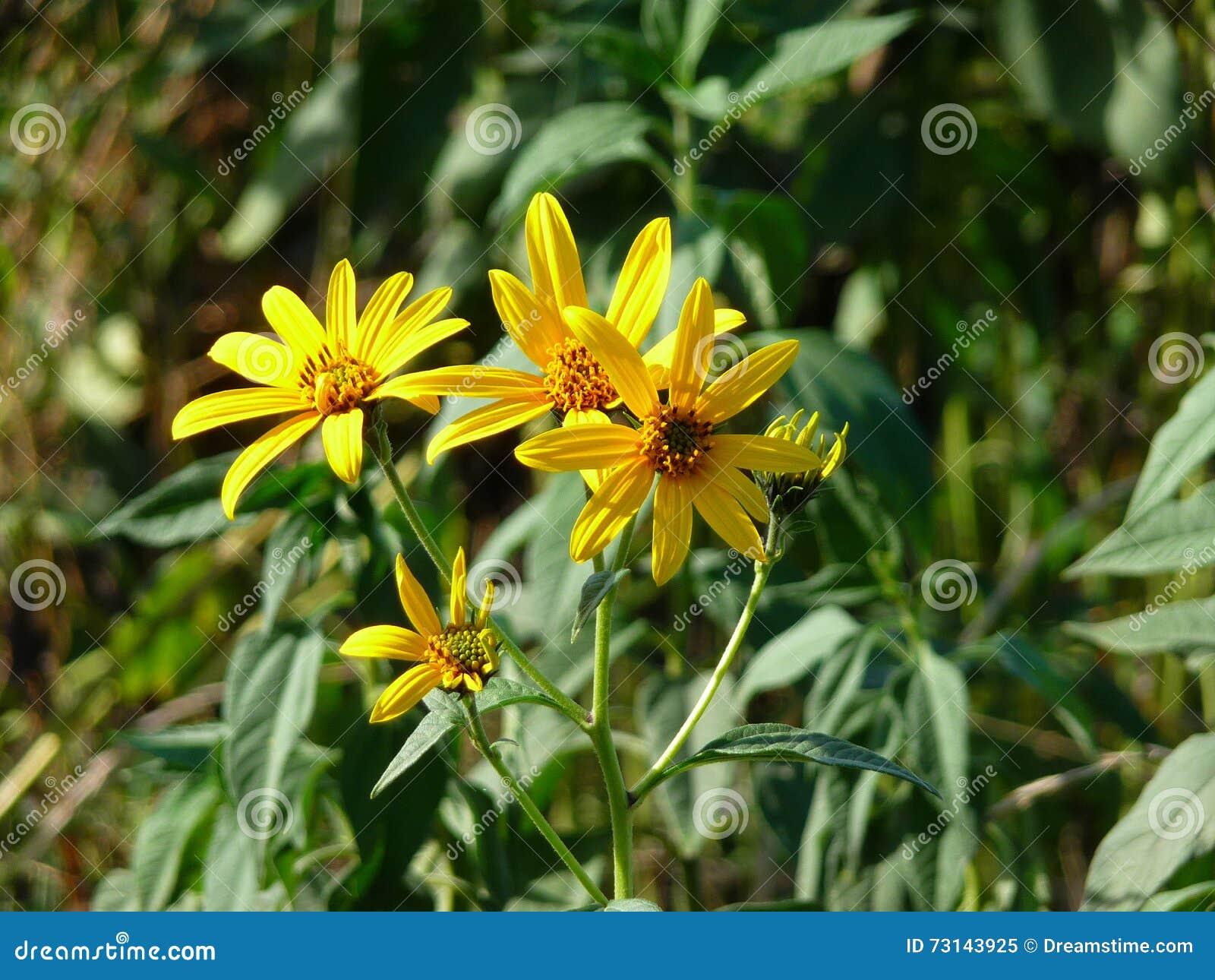 Wilde gele bloemen in de zon