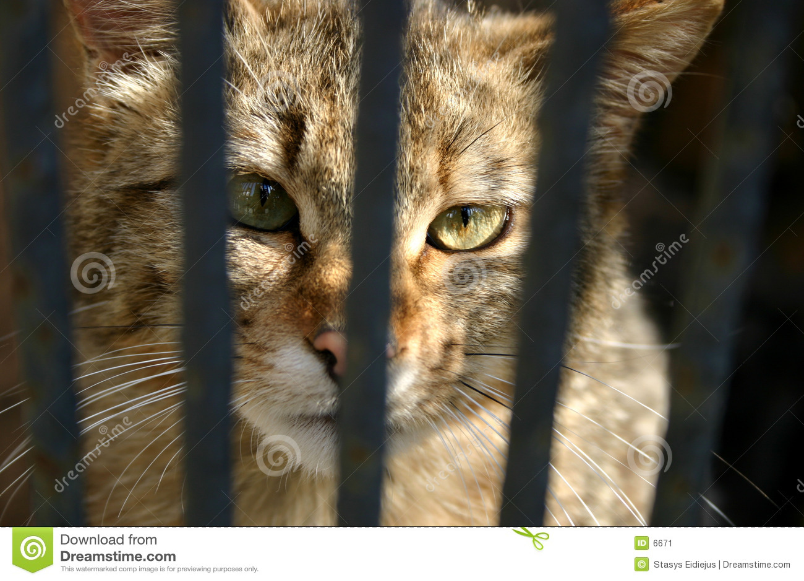 Wilde kat in de kooi