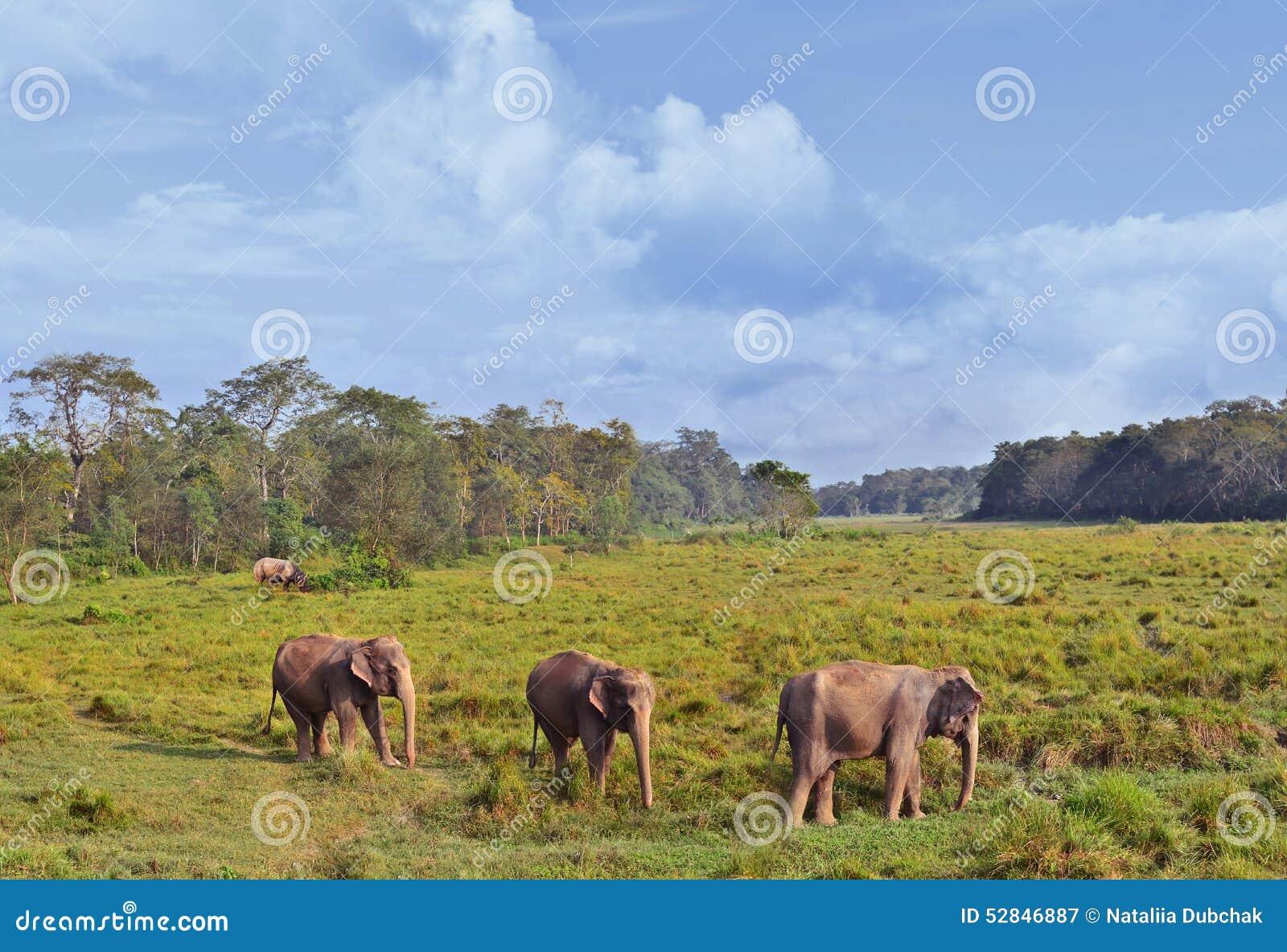 Wilde Landschaft mit asiatischen Elefanten