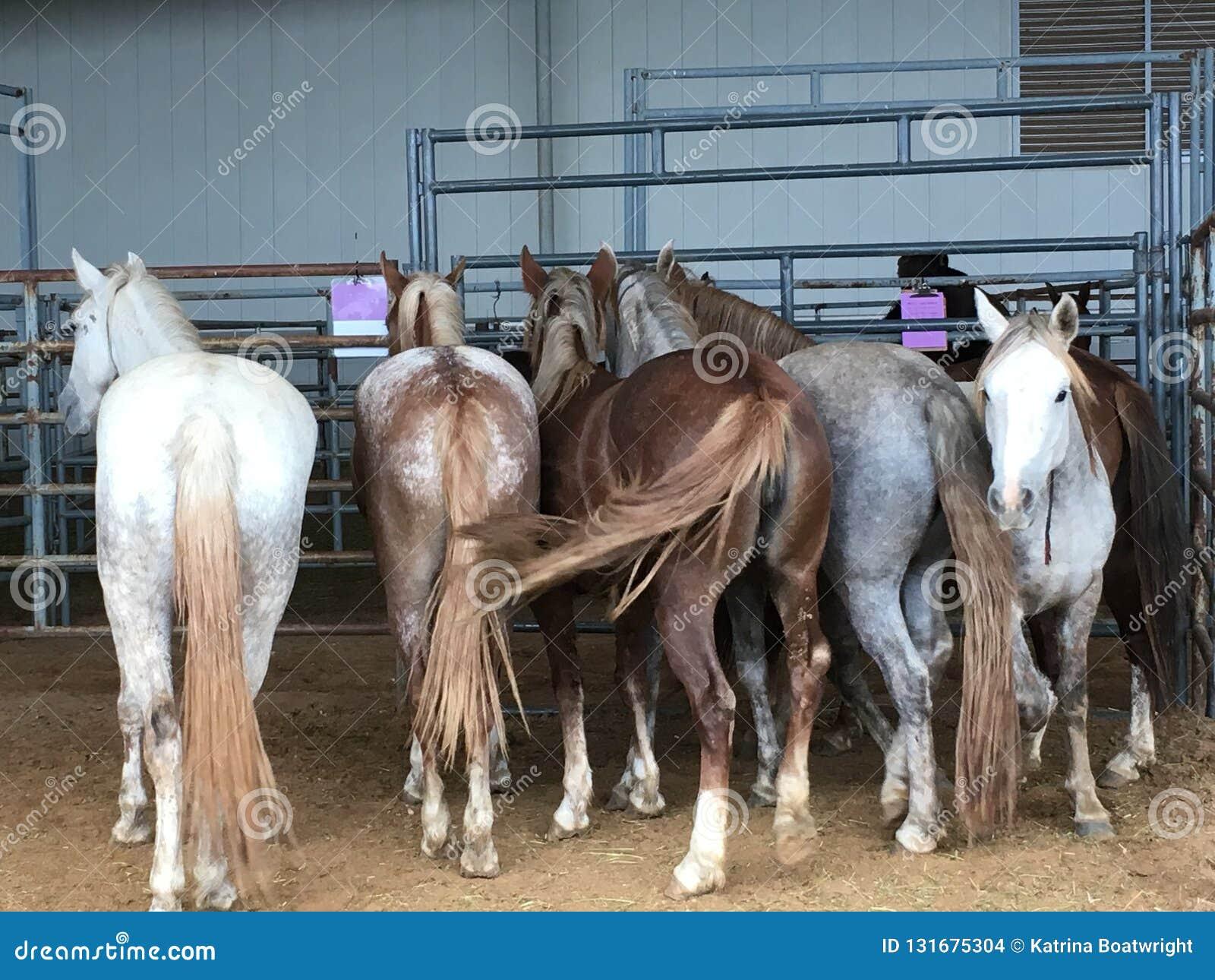 Wilde Mustangs sperrten oben ein