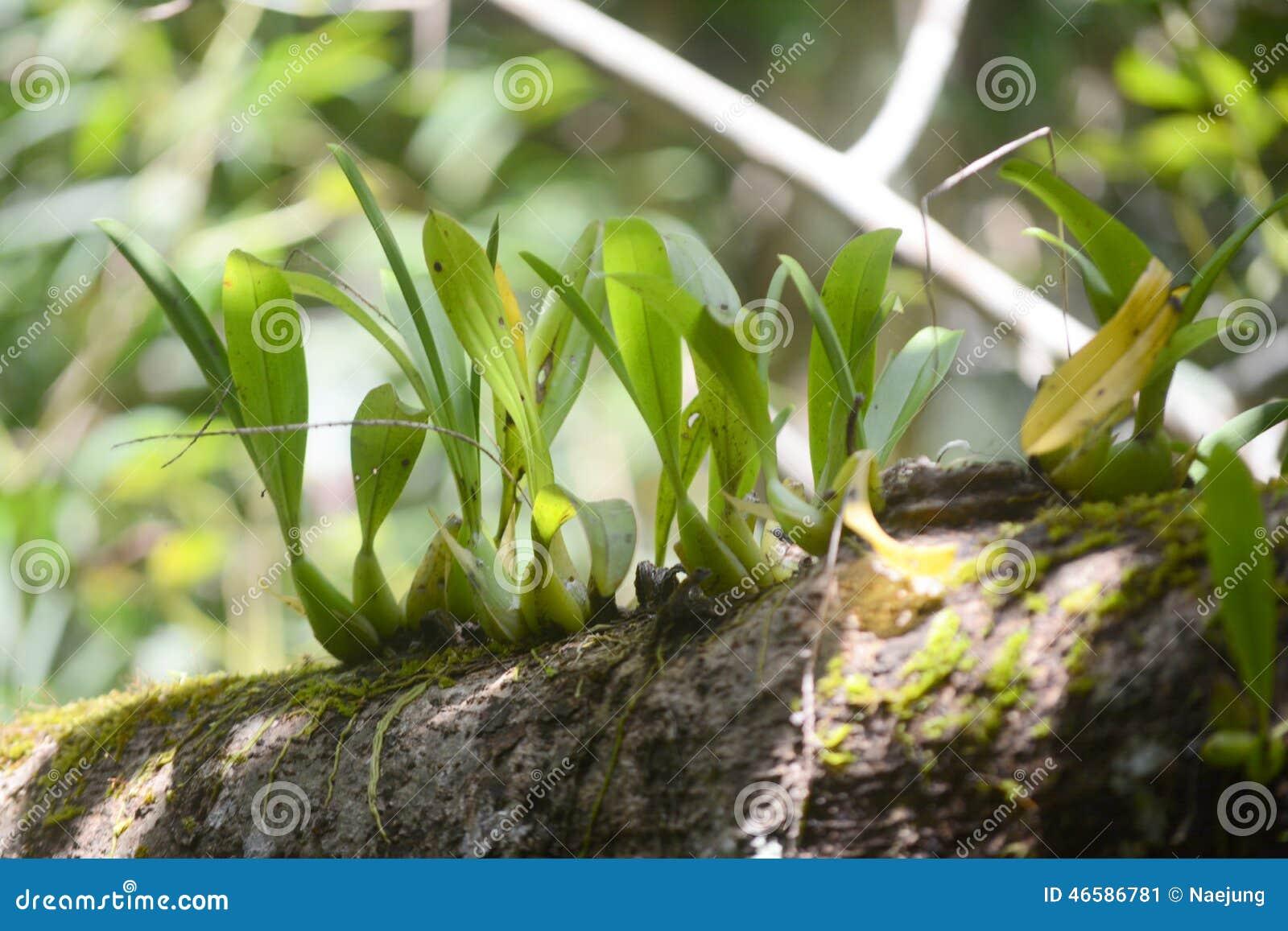 Wilde orchidee op boom