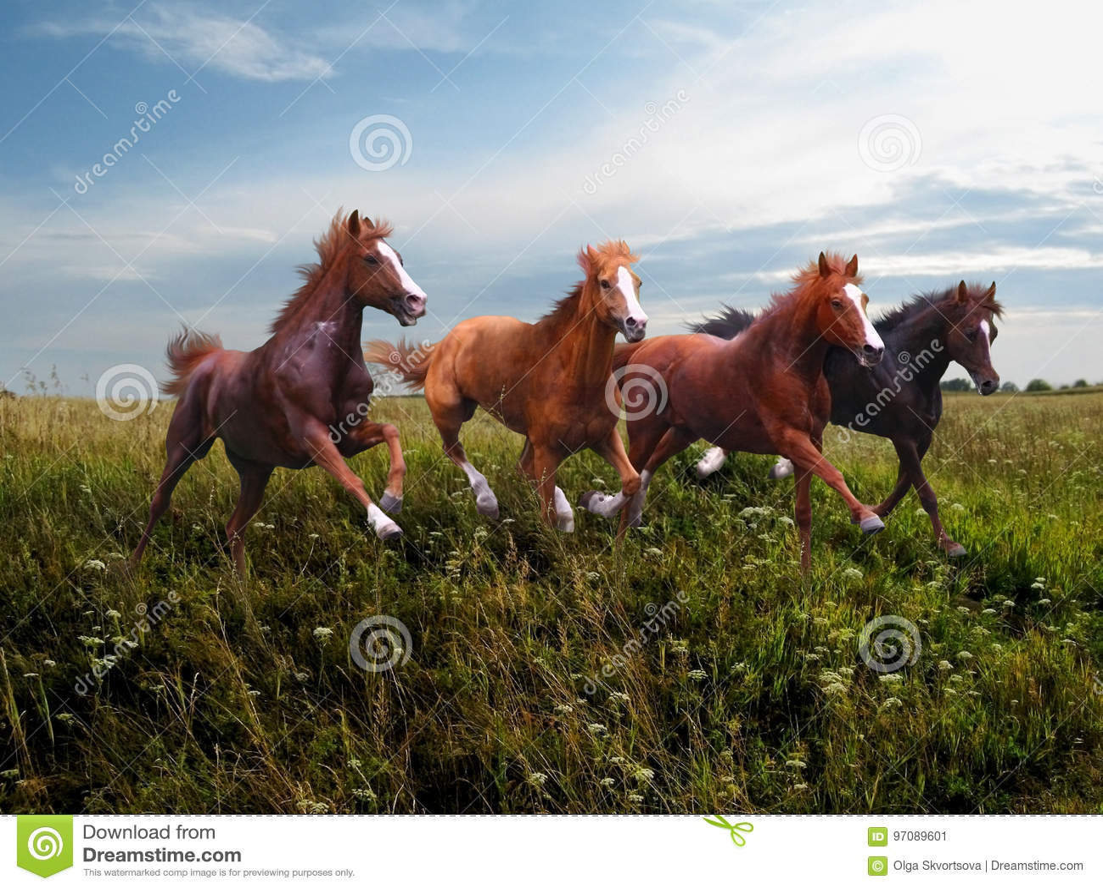 Wilde Pferdegalopp entlang dem Gras