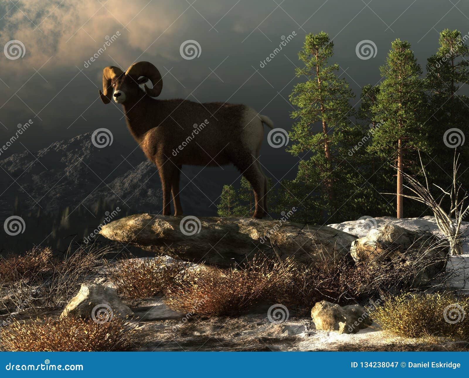 Wilde Ram in de Rotsachtige Bergen