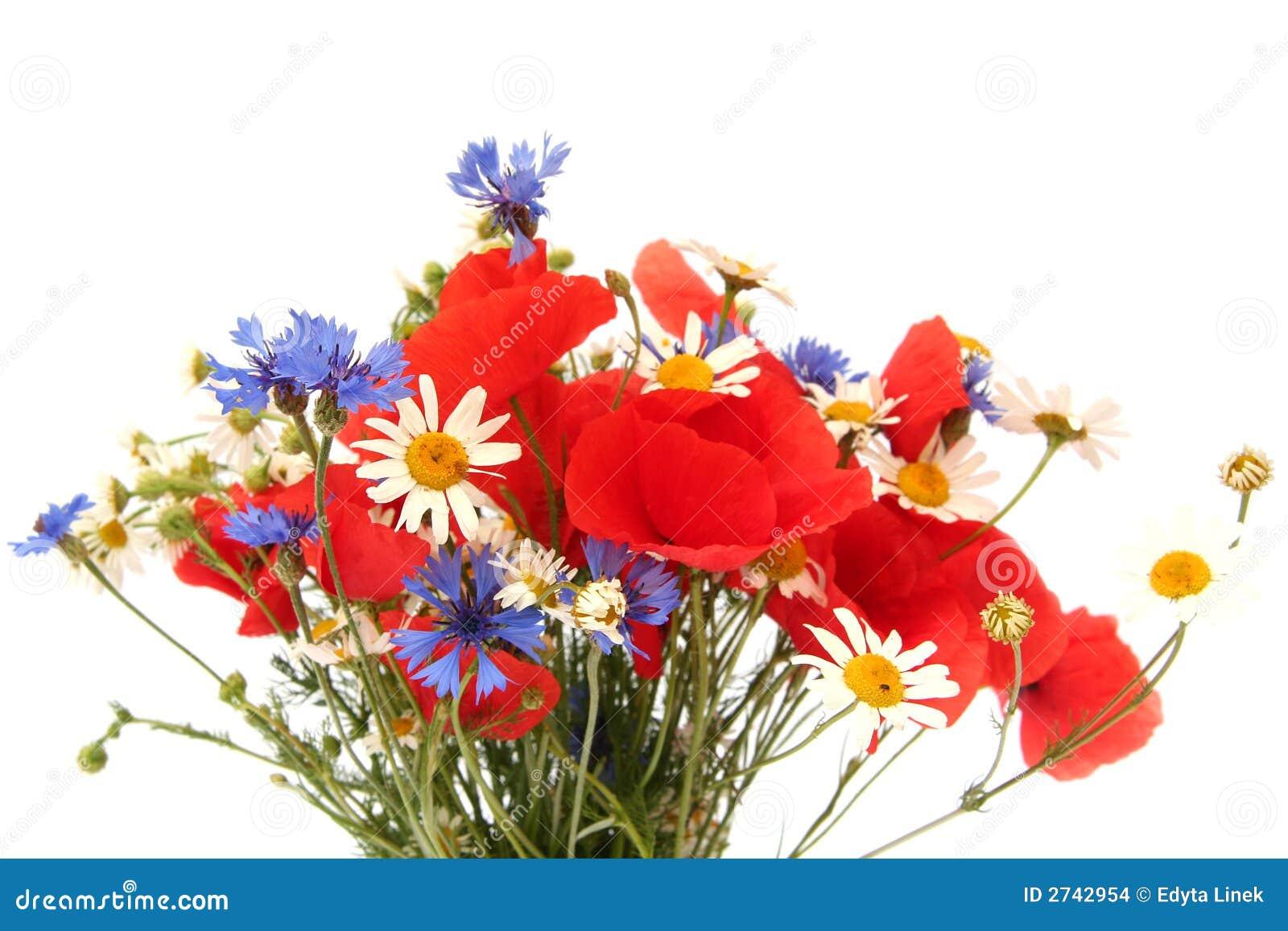 Wilde Sommerblumen