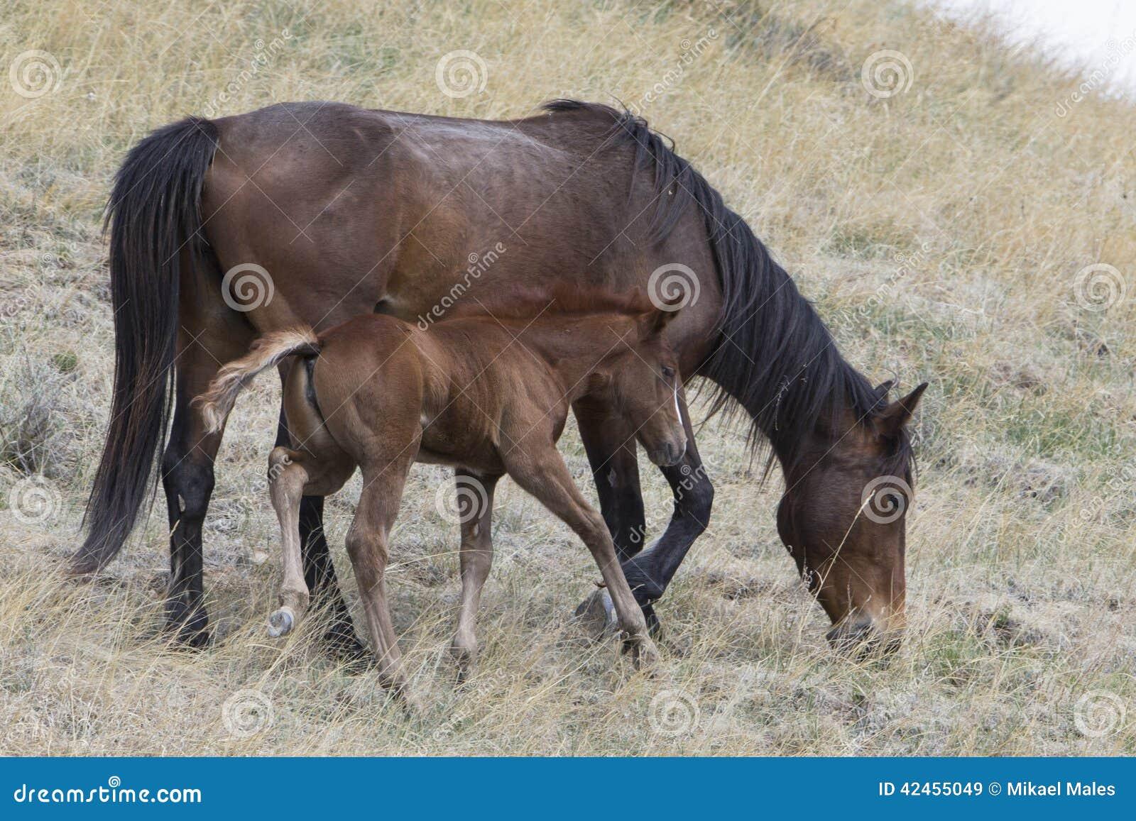 Wilde Stute mit jungem Colt