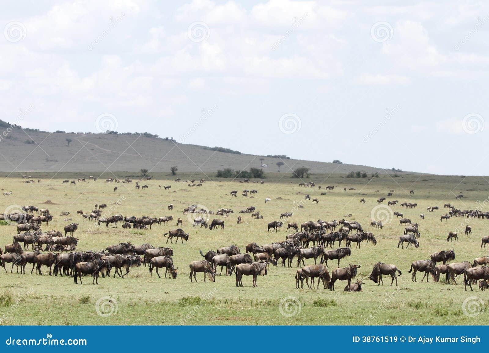 the wide spread grassland Ungulate Grasslands