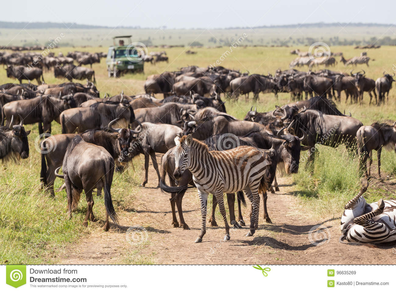 Wildebeests and Zebras grazing in Serengeti National Park in Tanzania, East Africa.