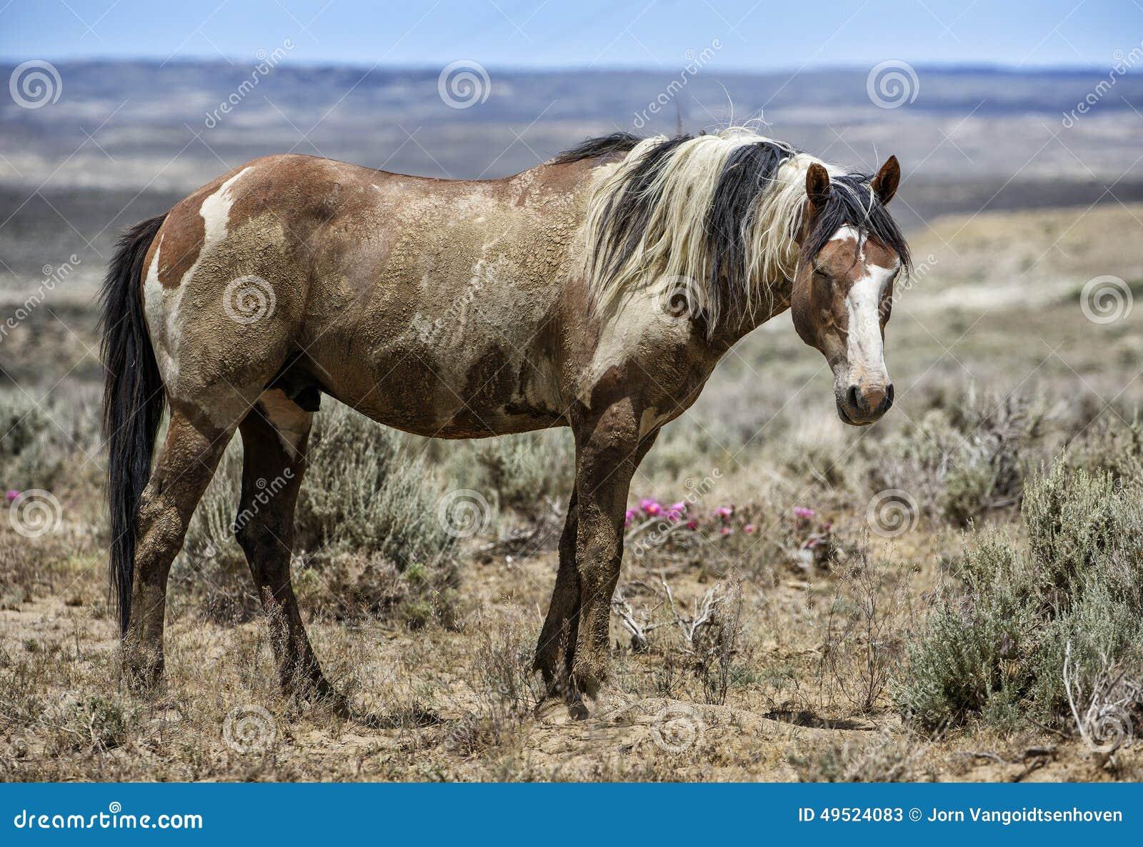 Wilder Pferdeportrait des Sand-Waschbeckens