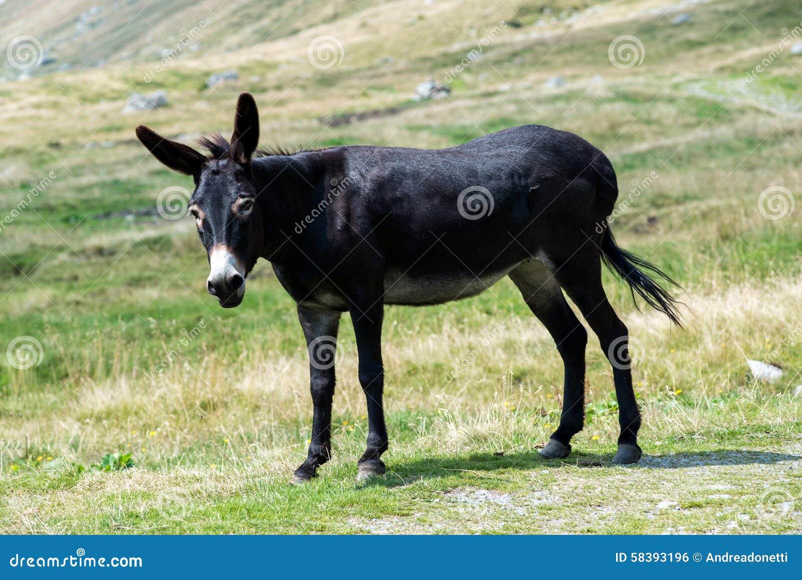 Schwarze Esel Junge Ingwer-Pornos