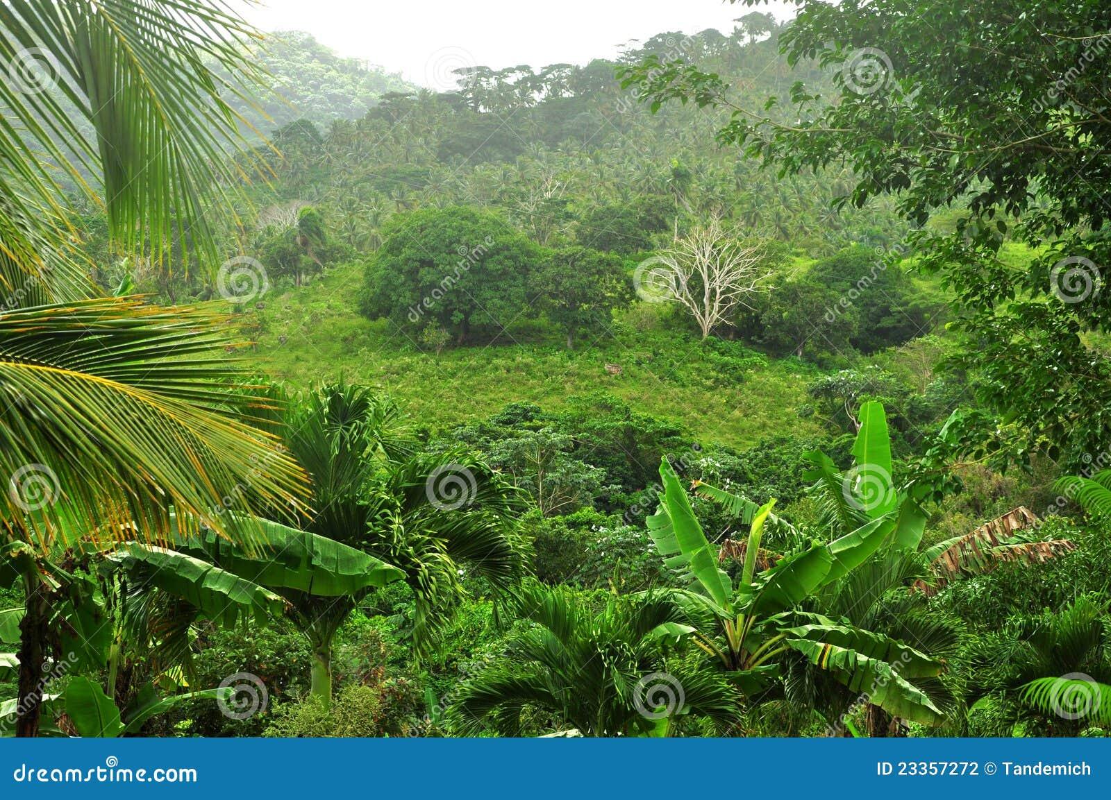 Wildernis bij Dominicaanse Republiek